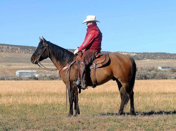 Best 25+ Horse sales ideas on Pinterest Pretty horses, Blue roan - horse sales contracts