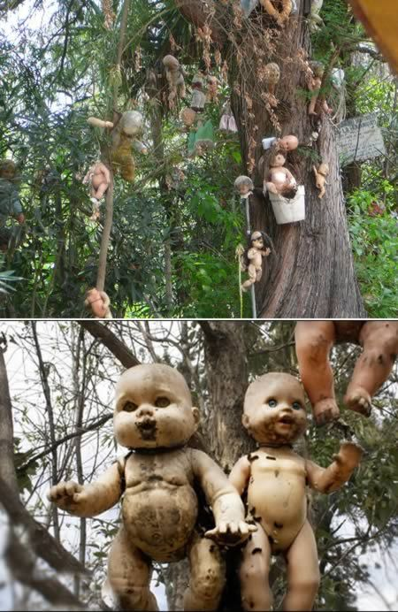 La Isla de las Muñecas is a bizarre tourist attraction by anyone's standards. Old mutilated dolls adorn almost every tree growing on the island, in silent tribute to the spirit of the child. According to legend, three young girls were playing and one of them drowned. A hermit named Don Julian Santana chose the remote island for his home and honored the spirit of the dead child by making a natural altar out of discarded dolls. He would bring them to the island and tie them to the trees.