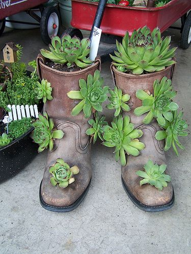 hens and chicks planted in old bootsmakes a stunning display anywhere in the gardenlove this this same idea with cowboy boots is cute too