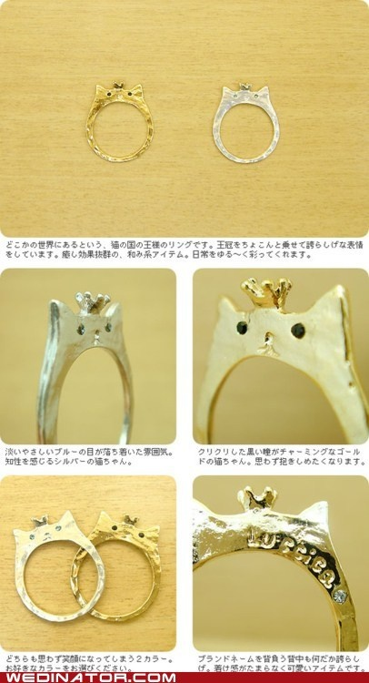 Cat wedding bands - hahahahahahhahahaah @Chelsea Reome @Jen Lindsey ... is this for people that marry their cats? hahaha i can't believe these real