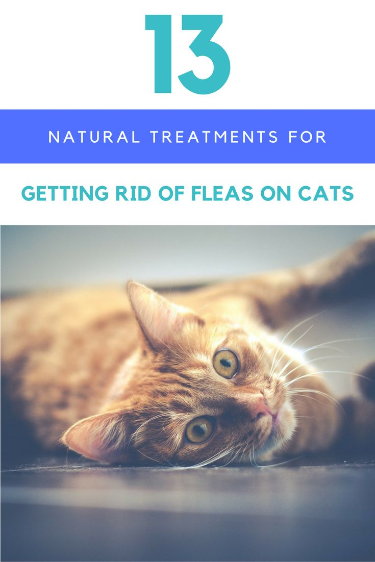 Natural Remedies To Keep Cats Away