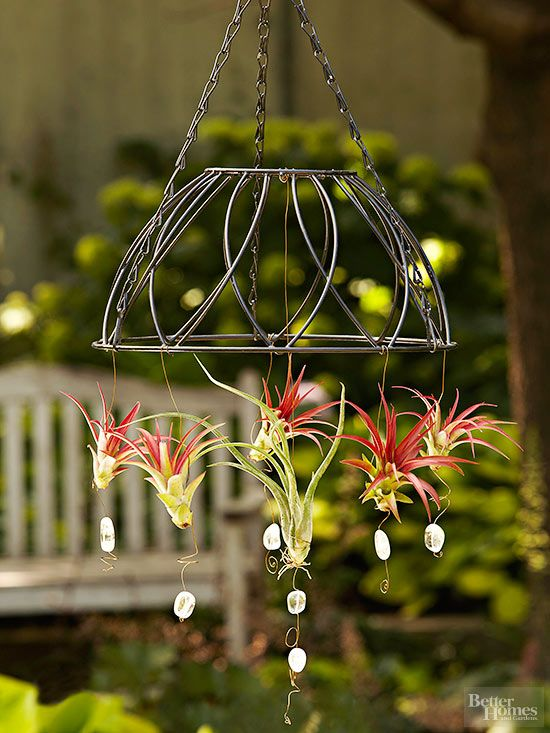 Attach air plants to a hanging outdoor fixture to create a stunning, living focal point./