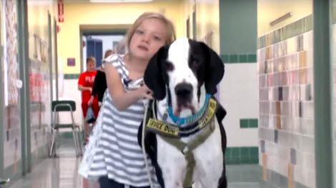 Watch video below. The awesome thing happend, when Bella meet George the Great Dane. A Great Dane with 131 pounds weight. And the George is big, but also gentle. As you can see in the video, he is a gentle … [CLICK TO READ MORE]