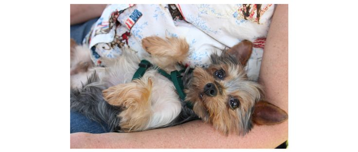 Tiny Paws Small Dog Rescue – Small Paws Big Hearts