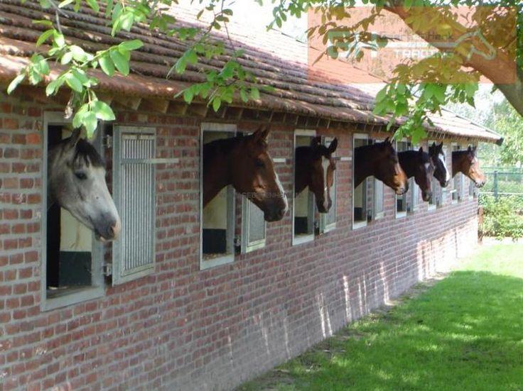 Paardenboxen en paardenstallen - Geert & Henk Trading   Geert en Henk Trading