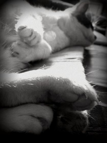 #paw #cat #cute #blackandwhite #sleeping