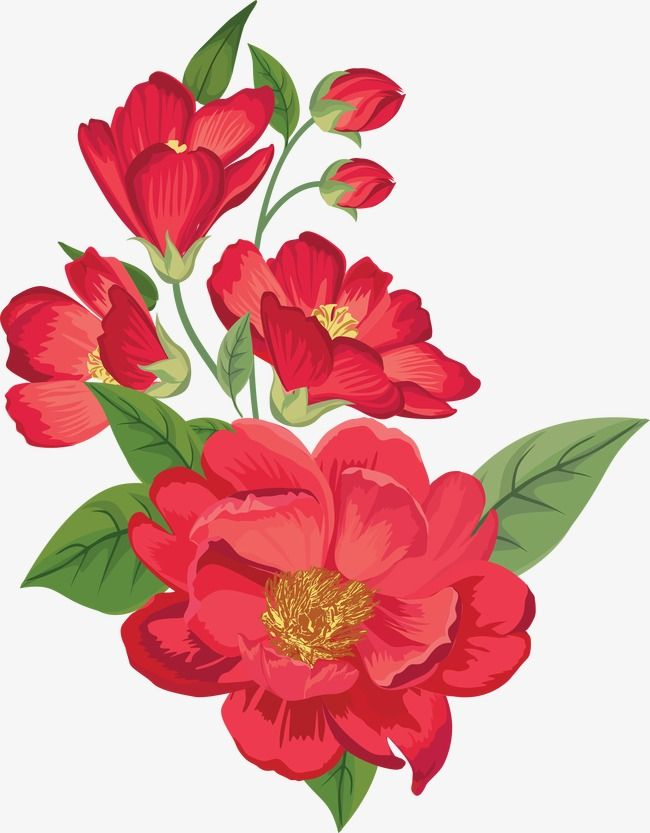 Red Flowers In Full Bloom Hand Painted Watercolor Flowers Png Transparent Clipart Image And Psd File For Free Download Flower Drawing Hibiscus Flower Drawing Watercolor Flowers