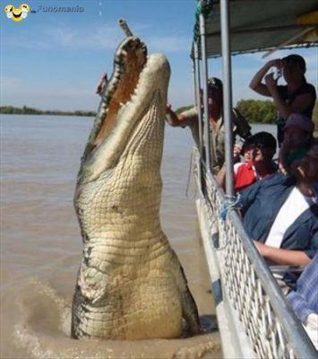 People enjoy their tour of the Australian wildlife.