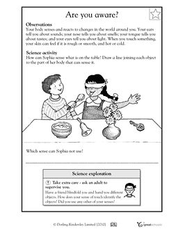 Worksheets Science Worksheets 1st Grade 13 best images about dorling kindersley on pinterest first grade our 5 favorite prek math worksheets