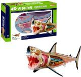 4D Vision Great White Shark Anatomy Model  DISCOVERY EXCLUSIVE! Anatomical precision of a great white shark distinguishes this fascinating 4D Shark Puzzle. With 20 detachable organs, bones and body parts,   http://www.ustoygames.com/4d-vision-great-white-shark-anatomy-model/#
