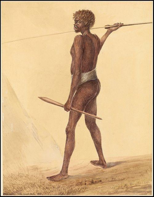 Blueit, a native of Botany Bay 1808 by peacay, via Flickr