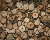100 - 1 inch natural cut tree branch slices, wood rounds, tree cookies, wood slices, eco friendly Great for DIY projects: Trees Rings, Crafts Ideas, Trees Branches, Crafts Projects, Trees Cookies, Buttons Trees, Trees Slices, Branches Slices, Hickory Wood