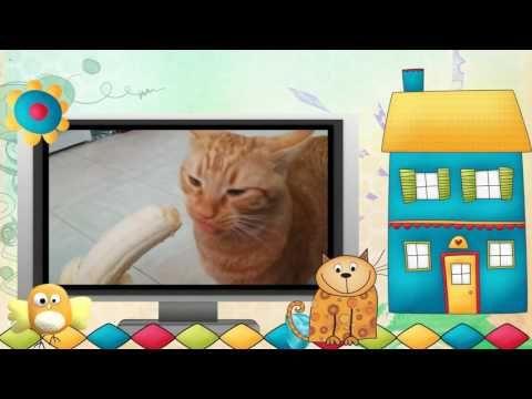 Видео клип.Коты и другие... Серия 9. #Видео #клип #Коты и другие - YouTube