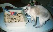 Cat with Kitty Litter Cake