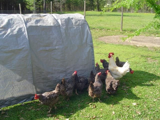 Easy cheap chicken tractor stuff to show my man for Cheap chicken tractor