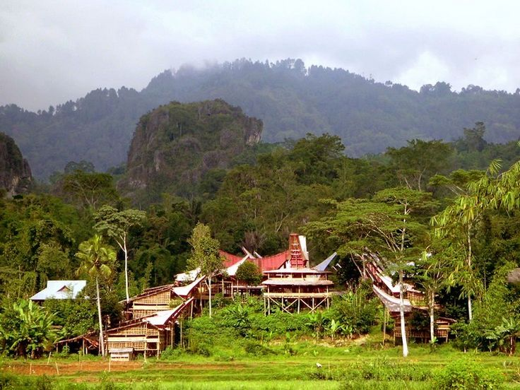 Around Rantepao, the capital of Toraja, its villages nestle at the foot of steep mountains. This region is known for funeral rites. With dances, songs, processions, battles and sacrifices of buffaloes, funeral Toraja are the most lavish of Indonesia.