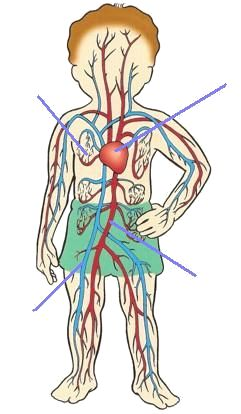 circulatory system for kids - Buscar con Google