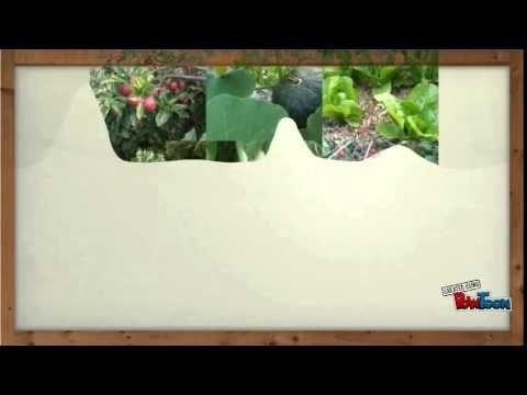 Caracteristicas de los Bosques de Alimentos