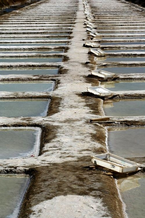 Harvesting salt from salt pans. Salinas, Tavira