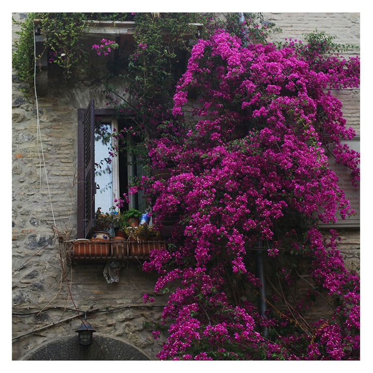 Bracciano, Italy | June 2015 | Shot by ME Social Media