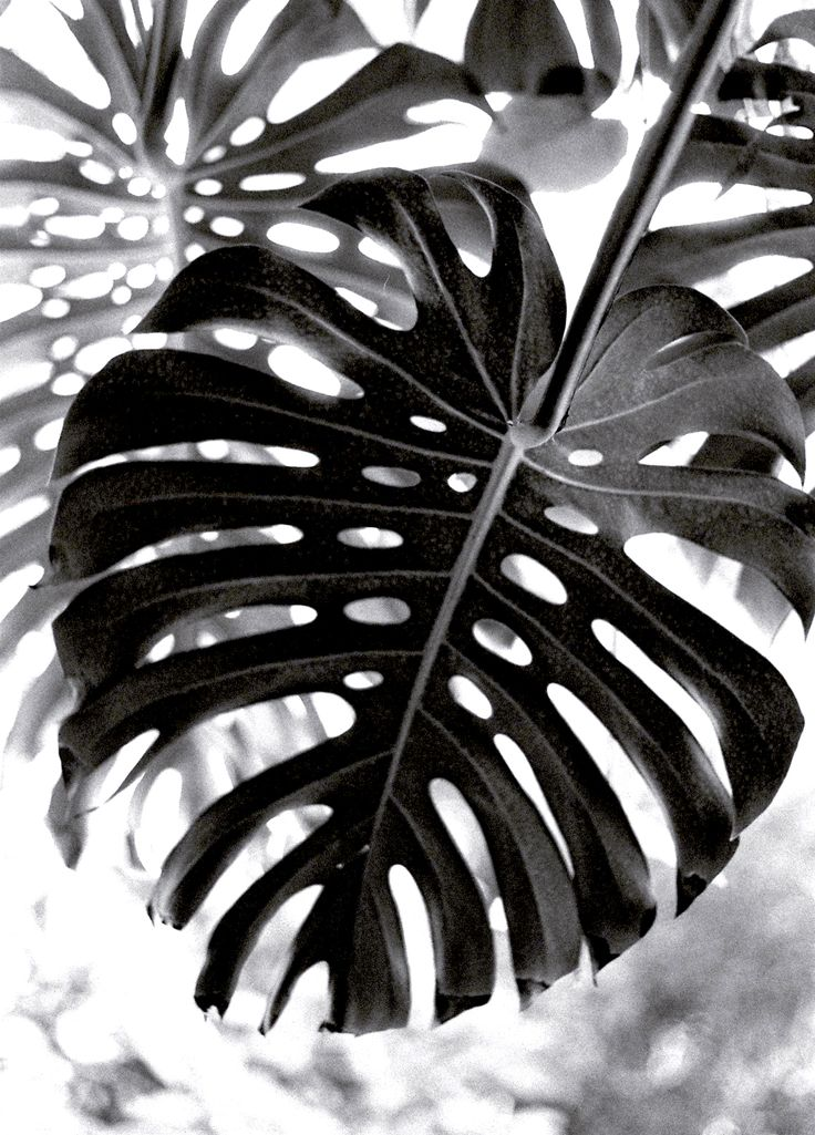 jungle@jardin des plantes