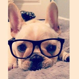 It's unclear why this guy looks so sullen when those glasses look so good. | A Definitive Ranking Of Dogs Wearing Eyeglasses