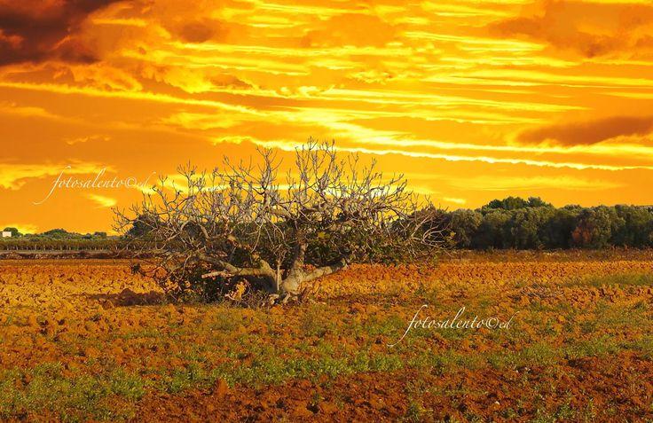 ....autunno di fuoco campagna salentina f o t o s a l e n t o ©