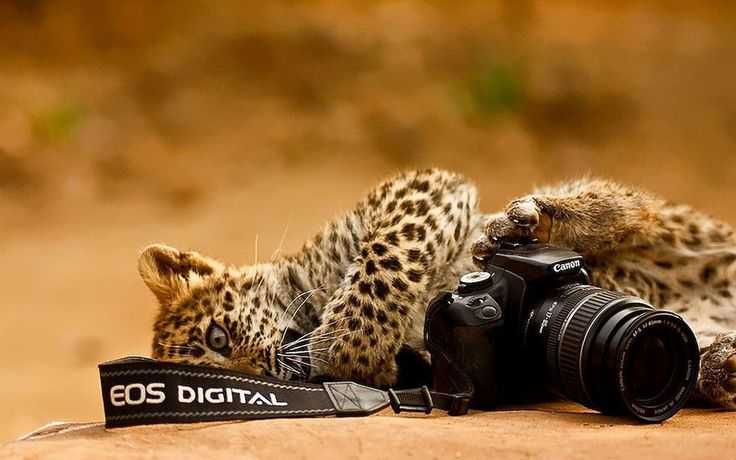 Pentru a face fotografii în sălbăticie trebuie să iubești cu adevărat animalele. Nu este deloc ușor să surprinzi cadre de toată frumusețea și, mai ales, pentru un astfel de job ai nevoie de foarte multă răbdare.   #animal #Animale #fotografii cu animale #imagini cu animale #imagini din natură #imagini natura