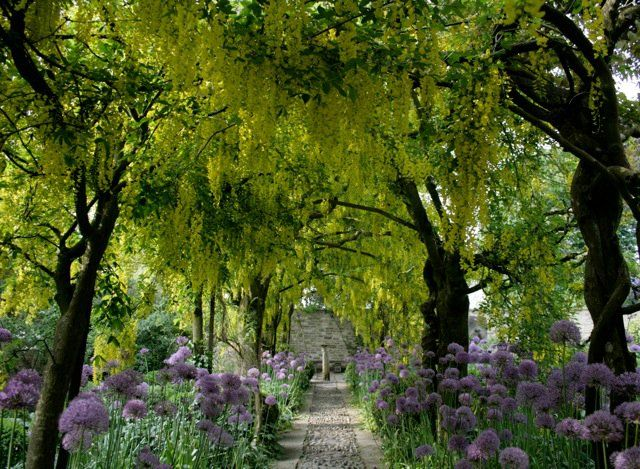 15 best The English Garden images on Pinterest Barnsley English