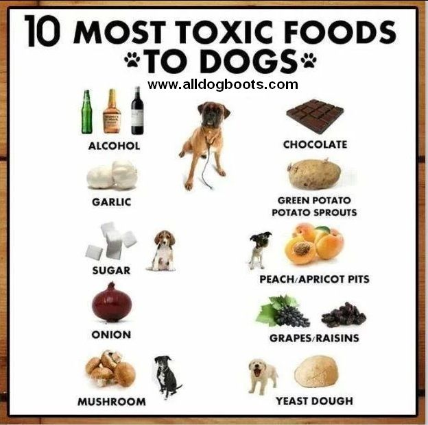 Know which foods dogs should not eat under any circumstance.