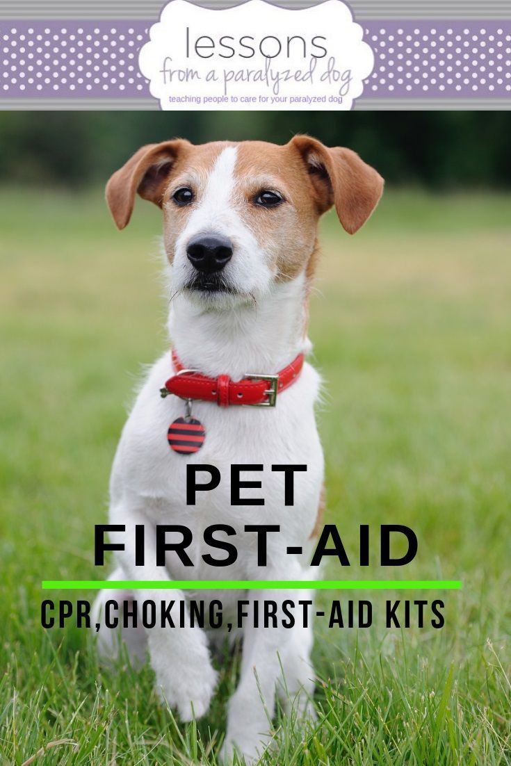 Can You Pass The Pet First Aid Quiz Pets First Aid Quiz First Aid