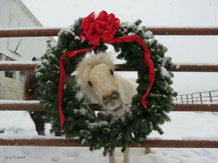 102 Best Merry Christmas Amp New Year Horses Images On