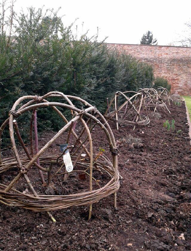 Willow Support. Sweet PeasVegetable GardenPlant SupportsSearchGarden  DesignWalled GardenGardeningPlantingGarden Structures