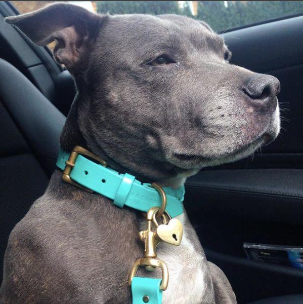 Turquoise Blue Plaited & Personalised Leather Dog Collar