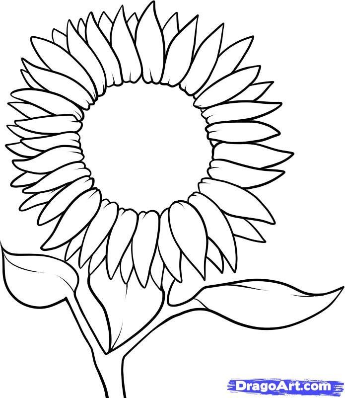 Die besten 25+ How to draw sunflowers Ideen auf Pinterest