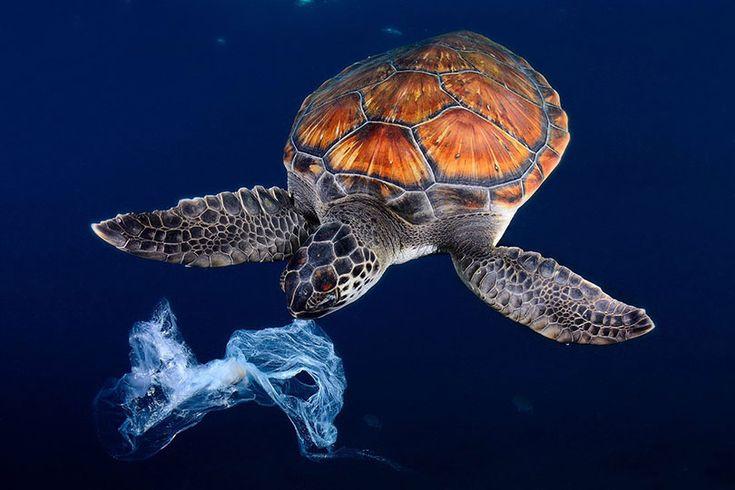 Fin des sacs plastique pour les fruits et légumes, évolution du bonus écologique, développement des pièces détachées automobiles d'occasion… Découvrez tout ce qui change en 2017 grâce à la loi de transition énergétique et la loi sur la biodiversité !