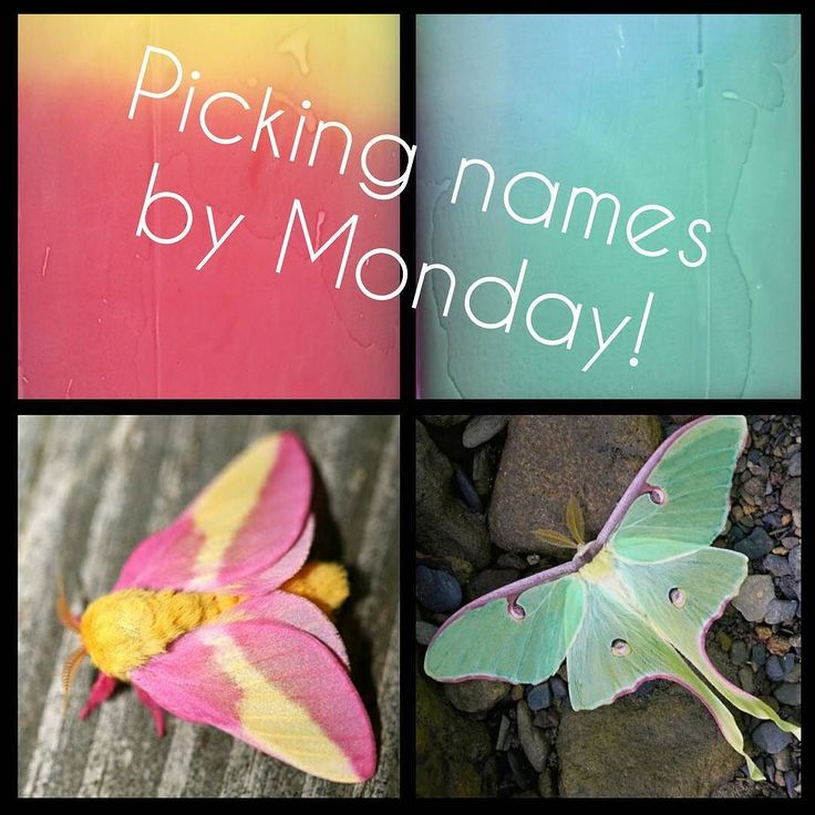 Thank you all for your name suggestions yesterday for our upcoming moth thermals.  We'll be picking a winner this weekend and the winning namers will get a bottle of the polish(es) they named. Feel free to keep submitting ideas check out our most recent post and comment there with your ideas.  #L13CYOA #cutebugs #lunamoth #rosymaplemoth #thermal #L13TT #Lucky13Lacquer #indienailpolish #nailpolish #lovehandmade  #madewithlove #beauty #makeup #fashion