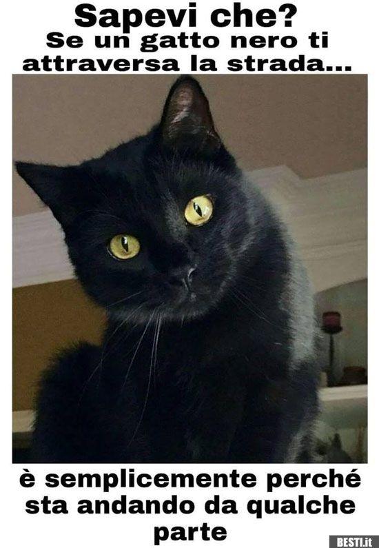 Esegui il download di questa immagine stock: Gatto nero di mangiare un pesce morto in strada - F2CG3R dalla libreria Alamy di milioni di fotografie, illustrazioni.