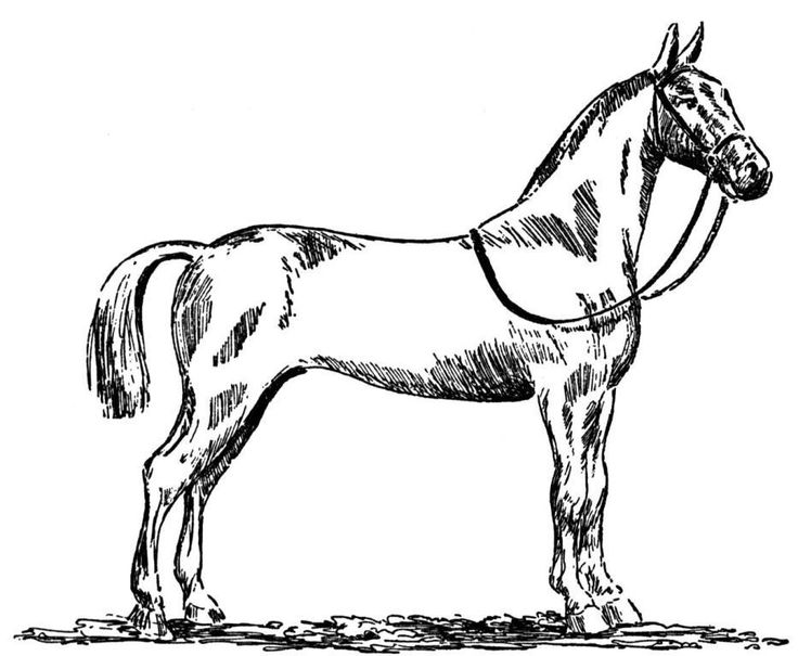 easy horse coloring pages - photo#25