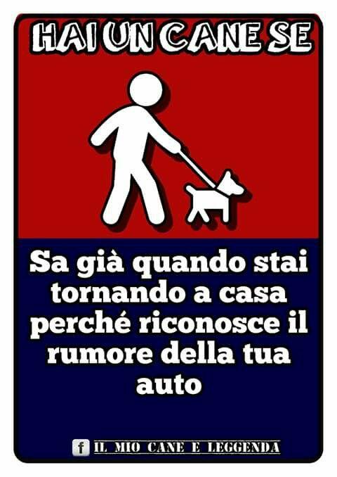 Dog cane hai un cane