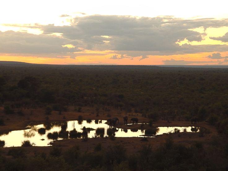 Overlooking a waterhole, elephants shadowed in the water, Victoria Falls, Zimbabwe