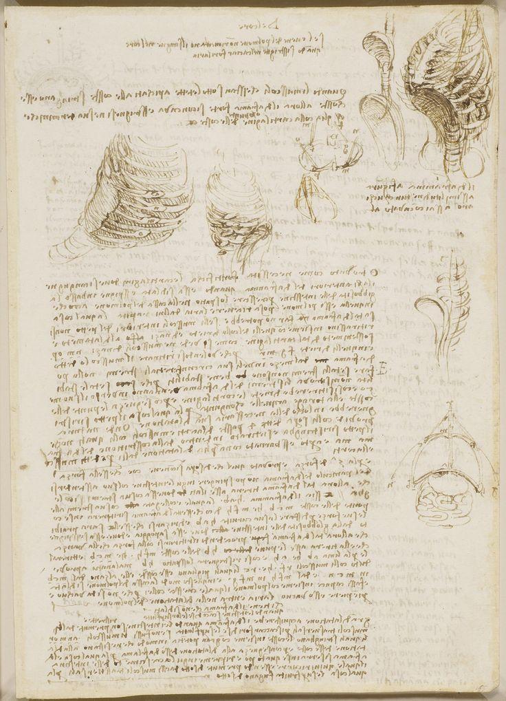 Leonardo da Vinci, 1452-1519, Italian, Studies of the thorax., c.1511-13.  Pen and ink.  Royal Collection Trust, Windsor.