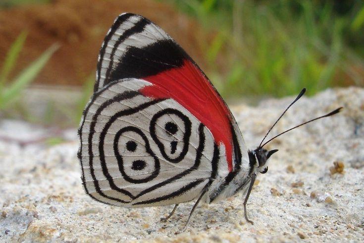 borboletas | SuperCaliBiologistic