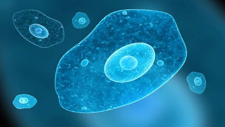 Resultado de imagem para parasita entamoeba histolytica