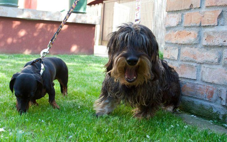 Wuff Daisy & Carlos https://www.facebook.com/WuffCollars/photos_stream