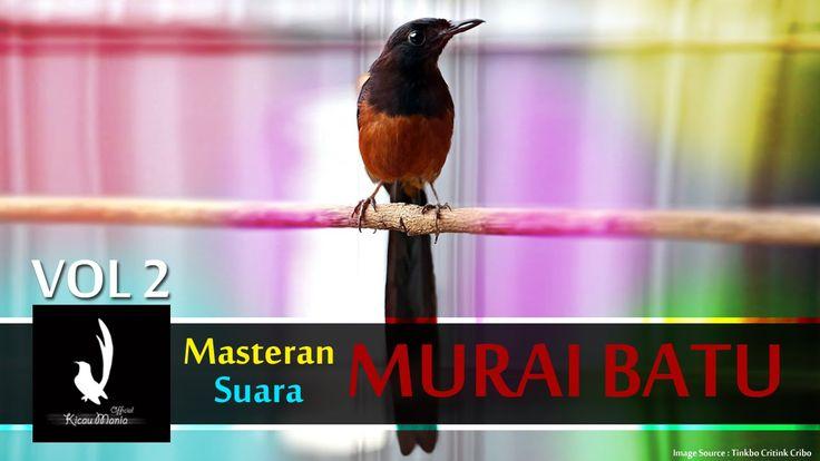 [TOP] Masteran Mp3 Suara Burung Murai Batu Nembak Keras Full Vol 2