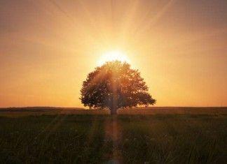 OSHO: Αγάπη, μοναξιά, μοναχικότητα