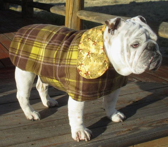 17 Best images about Dogs on Pinterest   American bulldogs