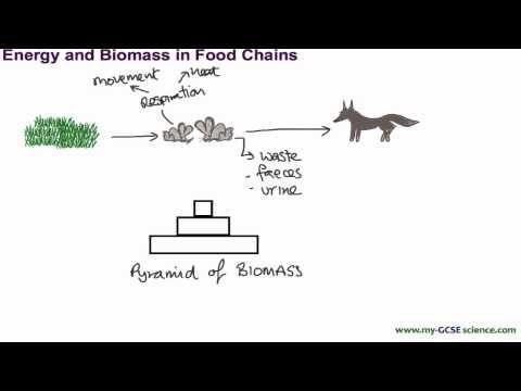 AQA GCSE Science and Biology - Energy and Biomass - vnasean.com