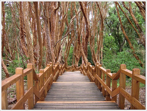 Bosque de Arrayanes  They say Walt Disney wrote Snow White here It is so beautiful and magical among these amazing trees